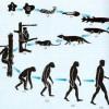 Darwin y la importancia de los museos
