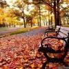 """Poesía solidaria: """"el viento de otoño"""""""