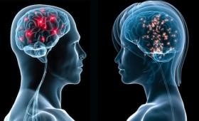 El cerebro tiene sexo