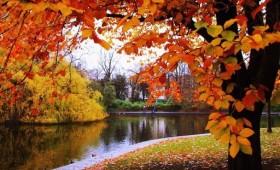 """Poesía solidaria: """"otoño en los jardines de La Granja"""""""