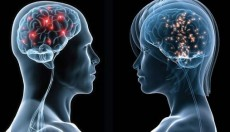 El cerebro enamorado