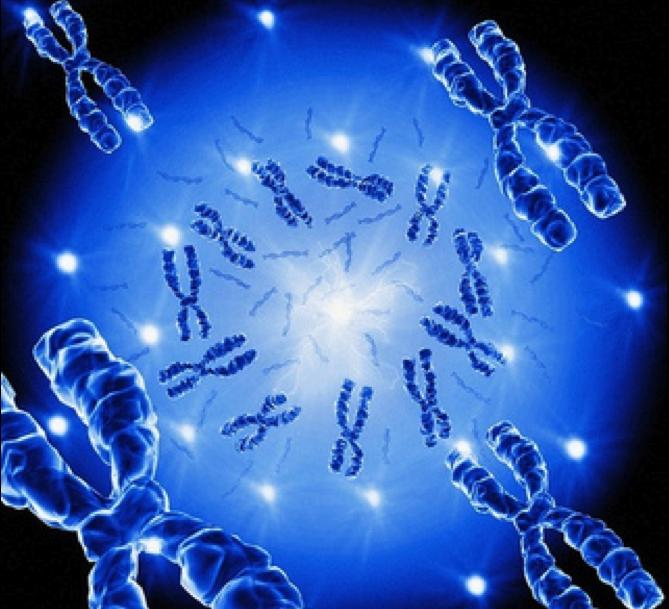 La imagen tiene un atributo ALT vacío; su nombre de archivo es genetica.png